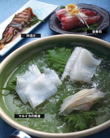 ケンサキイカの刺身、姿寿司、沖漬け