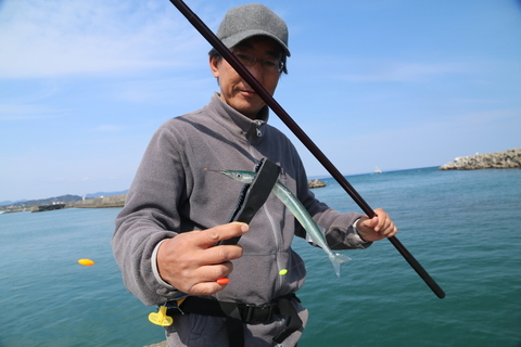 サヨリのウキ釣り(入門者向け)