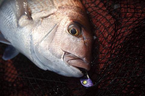 マダイの一つテンヤ釣りのすべて【入門者向け】