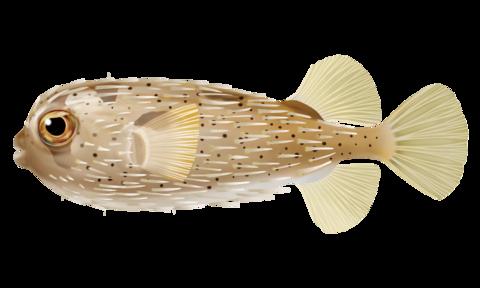 ハリセンボン針千本釣り百科 あらゆる釣りの知識が集約